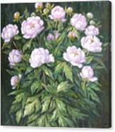 Bush Of Pink Peonies Canvas Print