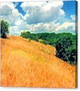 Bushes On A Hill Ae Canvas Print