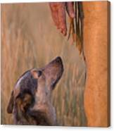Buster And Dawg Canvas Print