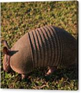 Busy Armadillo Canvas Print
