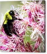 Busy As A Bumblebee Canvas Print