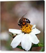 Busy Bee 3 Canvas Print