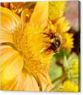 Busy Bee Canvas Print