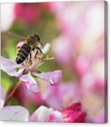 Busy Bee On A Crabapple Tree Canvas Print
