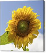 Busy Bee On A Sunflower Canvas Print