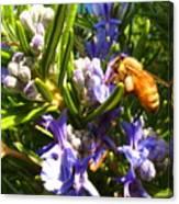Busy Rosemary Honeybee Canvas Print