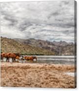 Butcher Jones Horses Canvas Print