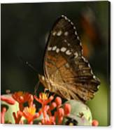 Butherfly Canvas Print
