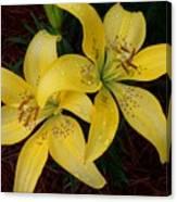 Buttercream Lilies Canvas Print