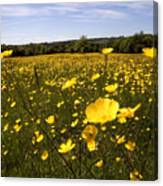 Buttercup Field Canvas Print