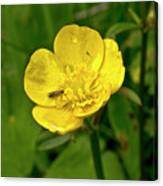 Buttercup Hospitality Canvas Print