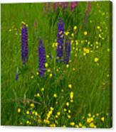 Buttercups And Lupines Canvas Print