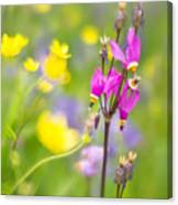 Buttercups And Shooting Star 1 Canvas Print