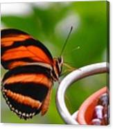 Butterflies Are Blooming Canvas Print