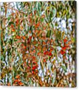 Butterflies In The Grove  Canvas Print