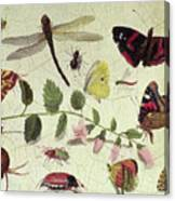 Butterflies, Insects And Flowers Canvas Print