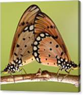 Butterflies Mating Canvas Print