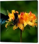 Butterflies On Yellow Azalea Canvas Print