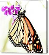 Butterfly 01 Canvas Print