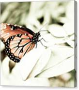 Butterfly 05 Canvas Print