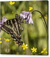 Butterfly 10 Canvas Print