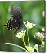 Butterfly 140 Canvas Print