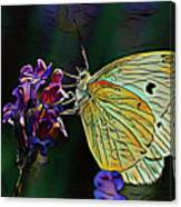 Butterfly 18718 Canvas Print