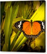 Butterfly 23 Canvas Print