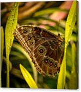Butterfly 25 Canvas Print