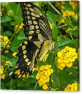 Butterfly 3 Canvas Print