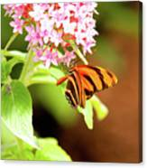 Butterfly-4 Canvas Print