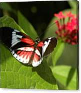 Butterfly-5 Canvas Print
