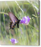 Butterfly 7 Canvas Print