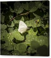 Butterfly 9 Canvas Print