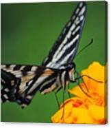 Butterfly Afternoon Canvas Print