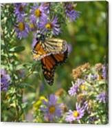 Butterfly And Blue Canvas Print