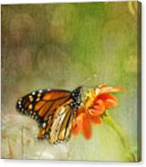 Butterfly And Bokeh Canvas Print