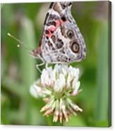 Butterfly And Bugs On Clover Canvas Print