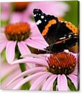 Butterfly And Cone Flowers Canvas Print