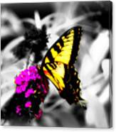 Butterfly And Lilac Canvas Print