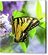 Butterfly And Lilacs Canvas Print