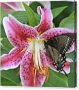Butterfly And Lilly Canvas Print