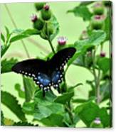 Butterfly And Mossy Pond Canvas Print