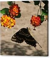 Butterfly And Nature Canvas Print