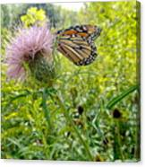 Butterfly And Pink Wildflower Canvas Print