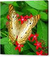 Butterfly And Red Star Sprig Canvas Print