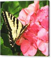 Butterfly And The Geranium Canvas Print