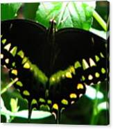 Butterfly Art 3 Canvas Print