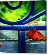 Butterfly At The Gate Canvas Print