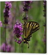 Butterfly Balancing Act Canvas Print